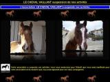 Le cheval vaillant